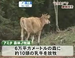 酪農 間伐 森