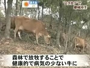 酪農 間伐